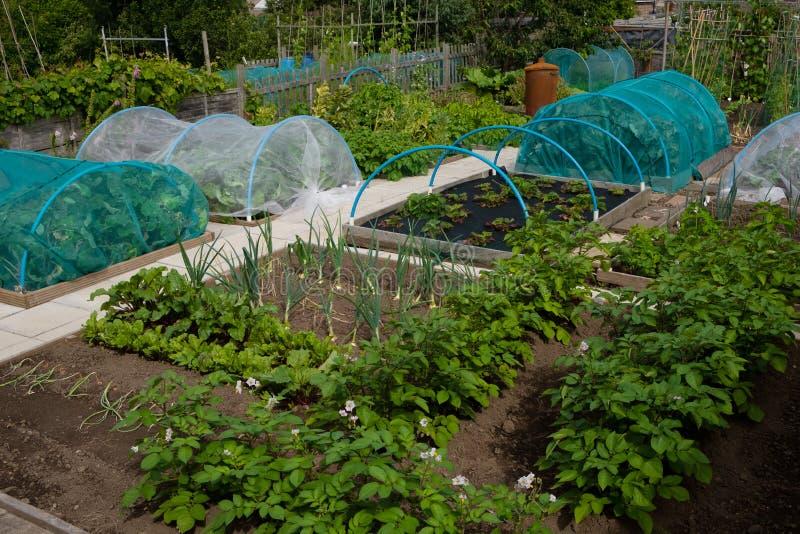 Πατάτες, κρεμμύδια, κράμβες και φράουλες που καλλιεργούνται με βάση την κατανομή με βάση τα δημητριακά στοκ εικόνες