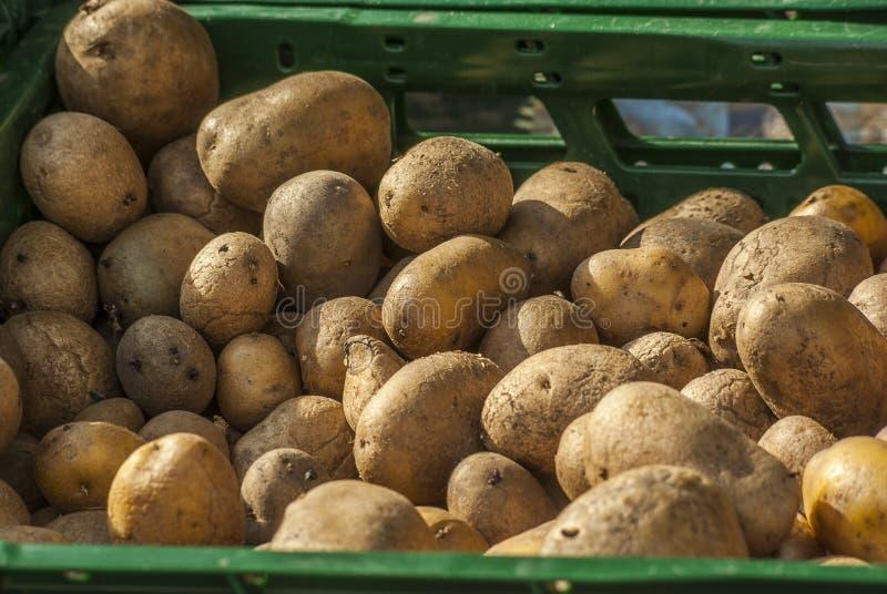 Πατάτες σε ένα πράσινο καλάθι στη στάση πωλήσεων σε μια αγορά αγροτών στοκ εικόνες με δικαίωμα ελεύθερης χρήσης
