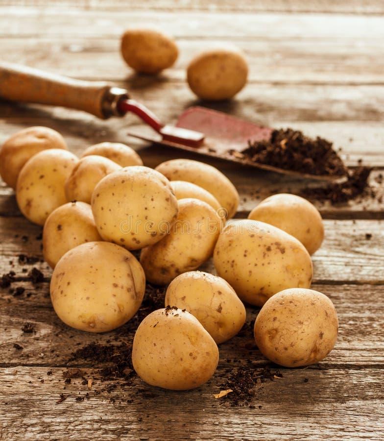 Πατάτες, φτυάρι και χώμα στον εκλεκτής ποιότητας ξύλινο πίνακα στοκ εικόνα με δικαίωμα ελεύθερης χρήσης