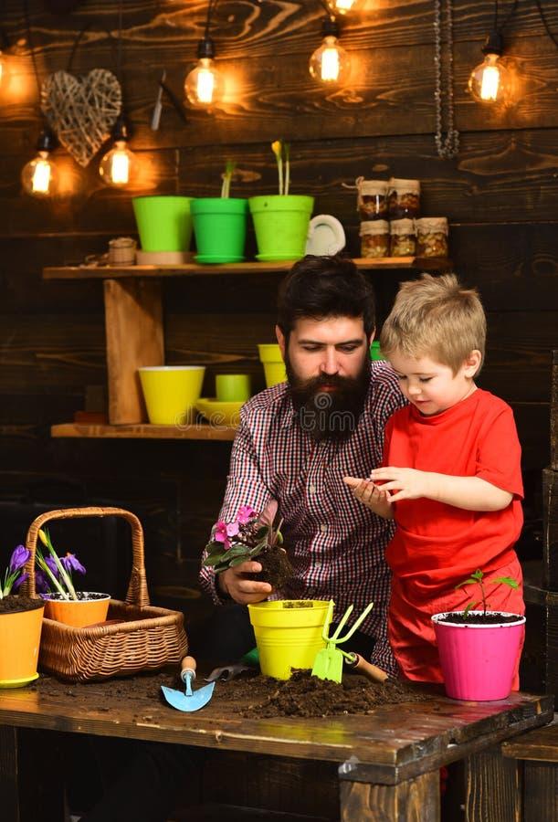 Πατέρας και γιος ευτυχείς κηπουροί με τα λουλούδια άνοιξη Πότισμα προσοχής λουλουδιών Εδαφολογικά λιπάσματα Γενειοφόρα άτομο και  στοκ εικόνα με δικαίωμα ελεύθερης χρήσης