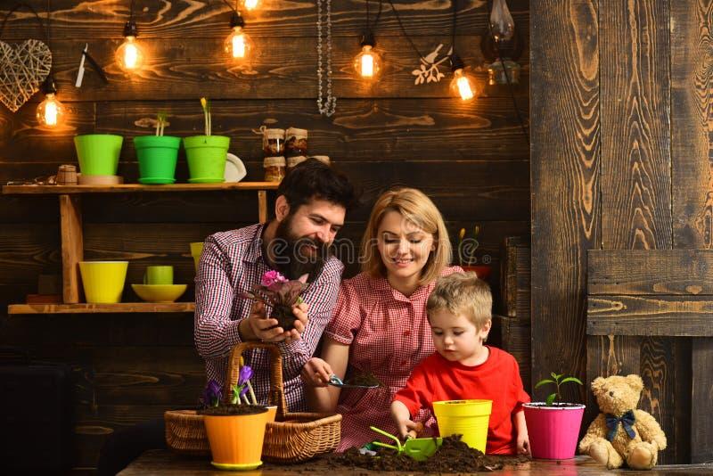 πατέρας και γιος με τη μητέρα ευτυχείς κηπουροί με τα λουλούδια άνοιξη Πότισμα προσοχής λουλουδιών Εδαφολογικά λιπάσματα γυναίκα, στοκ φωτογραφία με δικαίωμα ελεύθερης χρήσης