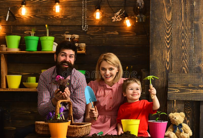 πατέρας και γιος με τη μητέρα ευτυχείς κηπουροί με τα λουλούδια άνοιξη Πότισμα προσοχής λουλουδιών Εδαφολογικά λιπάσματα γυναίκα, στοκ εικόνες με δικαίωμα ελεύθερης χρήσης