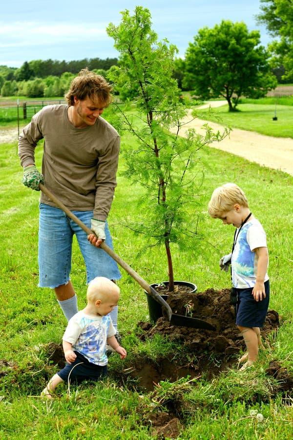 Πατέρας και τα παιδιά του που φυτεύουν το δέντρο στοκ εικόνα με δικαίωμα ελεύθερης χρήσης