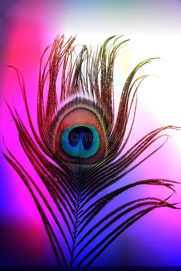 Πατέρας Peacock με το αφηρημένο ζωηρόχρωμο σκιασμένο υπόβαθρο επίσης corel σύρετε το διάνυσμα απεικόνισης απεικόνιση αποθεμάτων