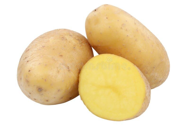 Πατατών λαχανικό τροφίμων που απομονώνεται φρέσκο στοκ εικόνες