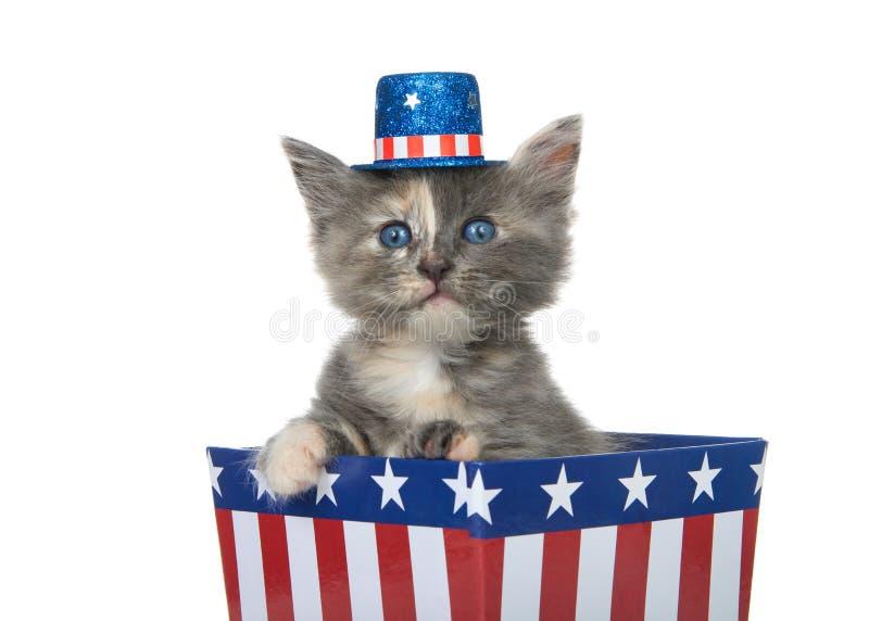 Πατριωτικό γατάκι που φορά το κόκκινο άσπρο μπλε καπέλο στοκ εικόνες