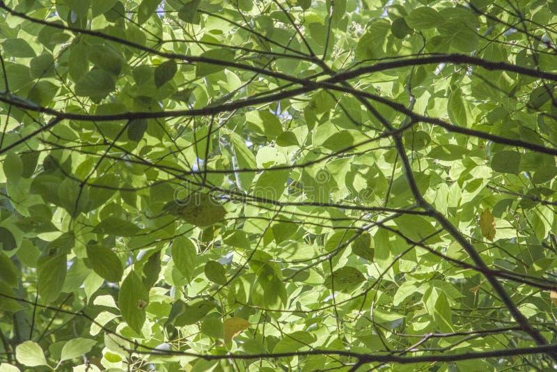 Παχιά φύλλα των δέντρων στοκ φωτογραφία