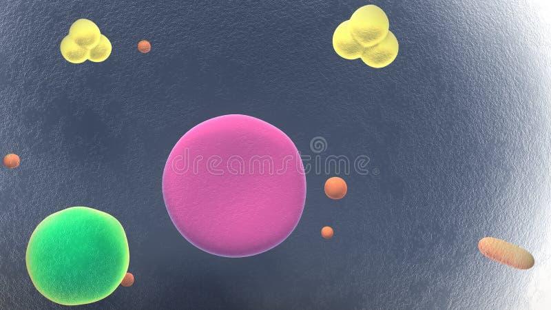 Παχύ κύτταρα ή Adipocytes διανυσματική απεικόνιση
