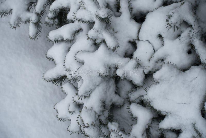 Παχύ στρώμα του χιονιού στους κλάδους των ερυθρελατών στοκ φωτογραφία με δικαίωμα ελεύθερης χρήσης