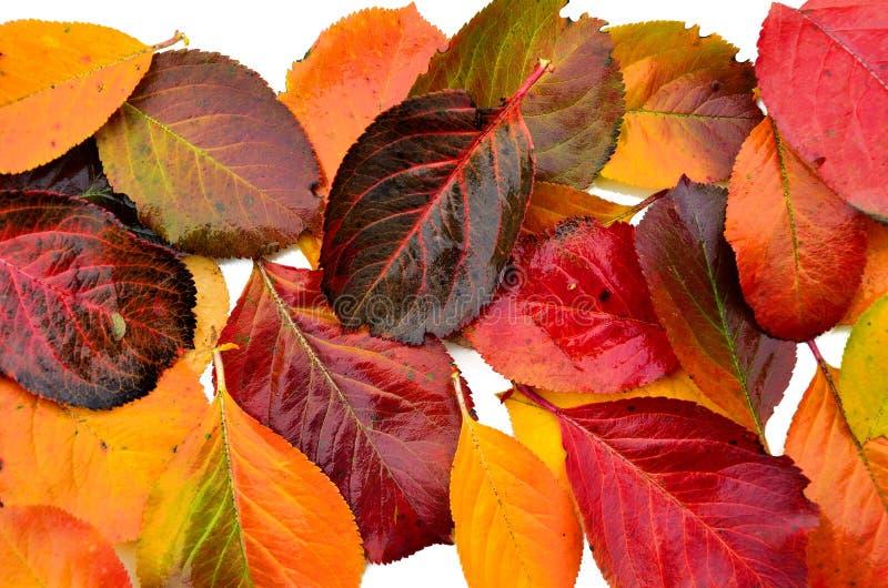 Παλέτα φύλλων φθινοπώρου στοκ φωτογραφία με δικαίωμα ελεύθερης χρήσης