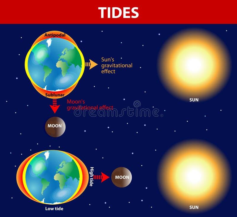 Παλίρροιες. Διανυσματικό διάγραμμα. διανυσματική απεικόνιση
