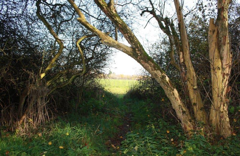 Παλαιά δέντρα και ένα λιβάδι στοκ εικόνα