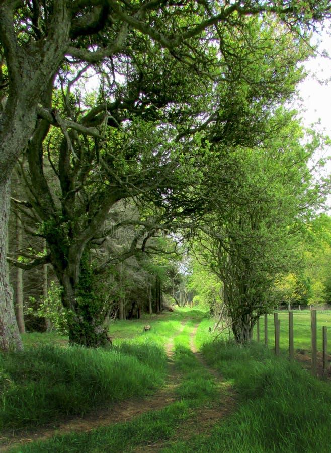παλαιά δέντρα στοκ φωτογραφία με δικαίωμα ελεύθερης χρήσης