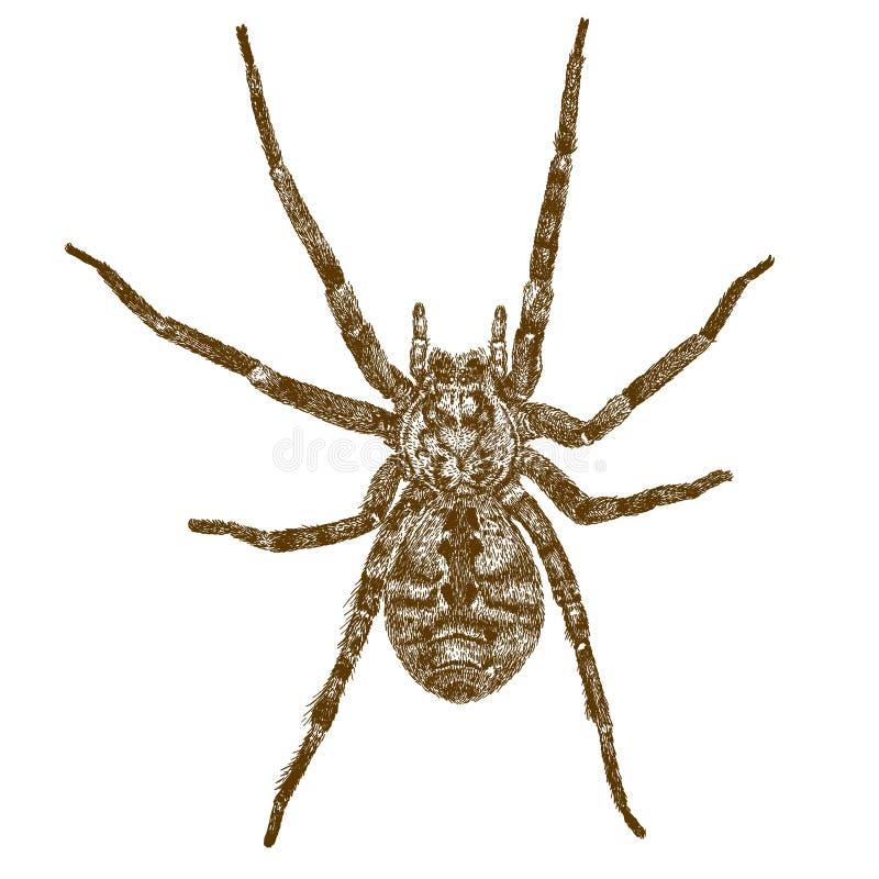 Παλαιά απεικόνιση χάραξης της μεγάλης αράχνης απεικόνιση αποθεμάτων