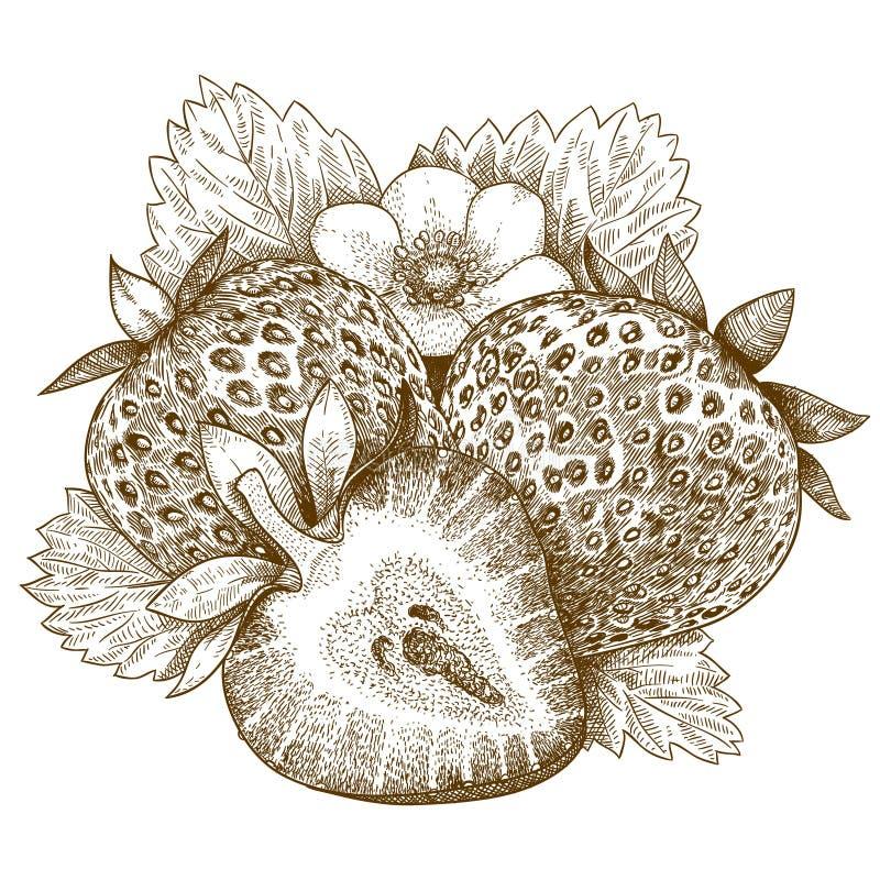 Παλαιά απεικόνιση χάραξης της φράουλας απεικόνιση αποθεμάτων
