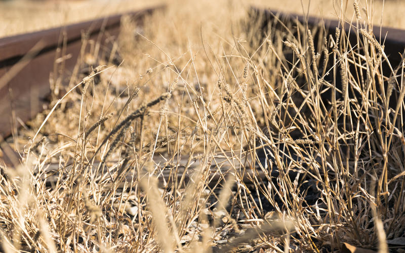 Παλαιά γραμμή σιδηροδρόμων με τη μακριά ξηρά χλόη στοκ εικόνες με δικαίωμα ελεύθερης χρήσης