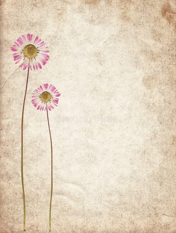 Παλαιά εκλεκτής ποιότητας σύσταση εγγράφου με τα ξηρά λουλούδια απεικόνιση αποθεμάτων