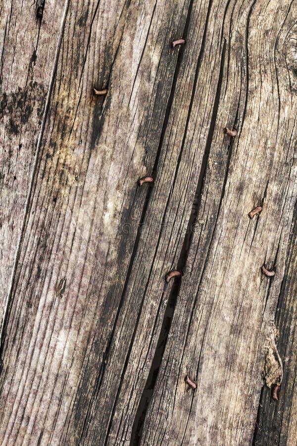 Παλαιά ξεπερασμένη ραγισμένη καρφωμένη Pinewood Floorboards σάπια σύσταση Grunge στοκ φωτογραφίες με δικαίωμα ελεύθερης χρήσης