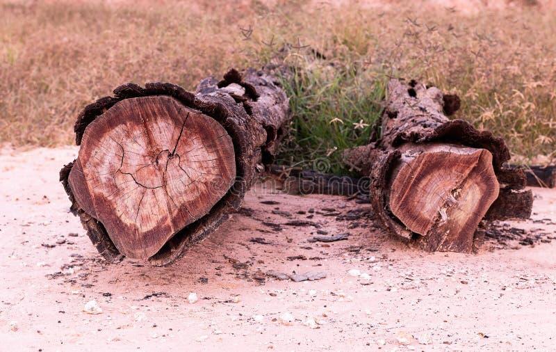 Παλαιά ξυλεία σε ένα λιβάδι στοκ φωτογραφία
