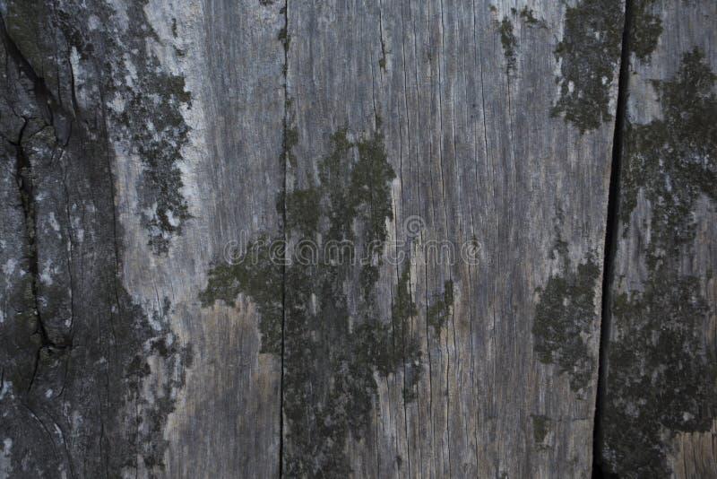 παλαιά σανίδα στοκ εικόνα