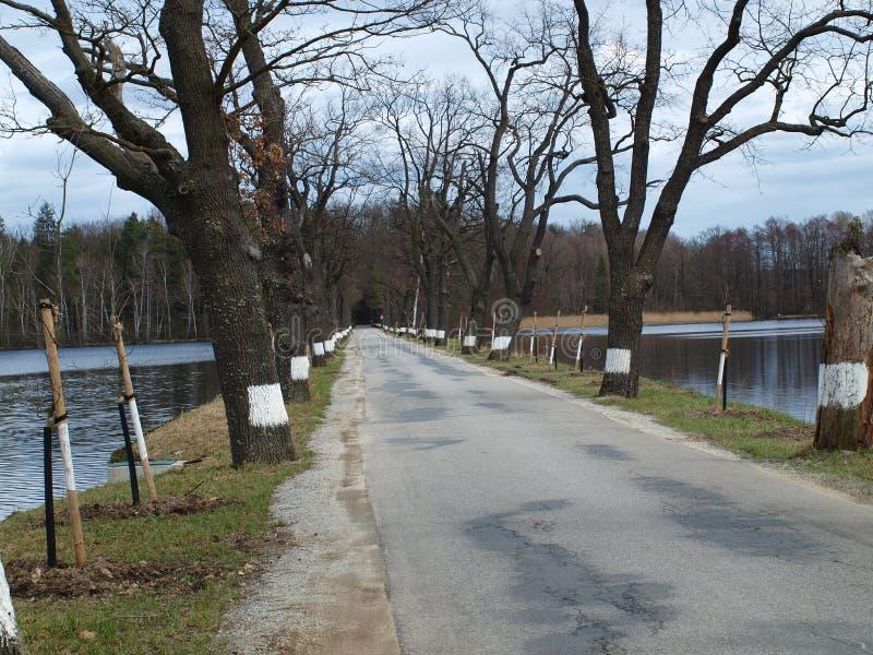 Παλαιός δενδρώδης δρόμος μεταξύ των λιμνών στοκ φωτογραφίες με δικαίωμα ελεύθερης χρήσης