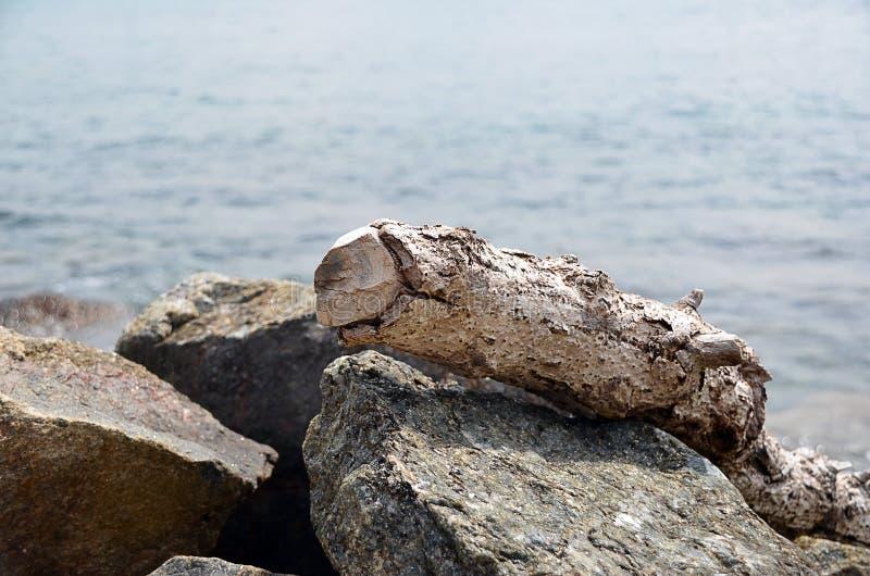Παλαιός κορμός δέντρων στους βράχους θαλασσίως στοκ φωτογραφίες