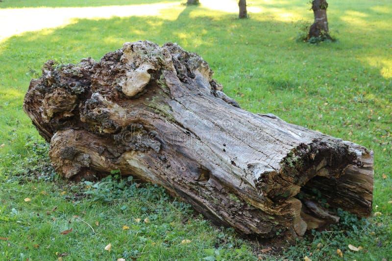 παλαιός κορμός δέντρων στοκ εικόνες με δικαίωμα ελεύθερης χρήσης
