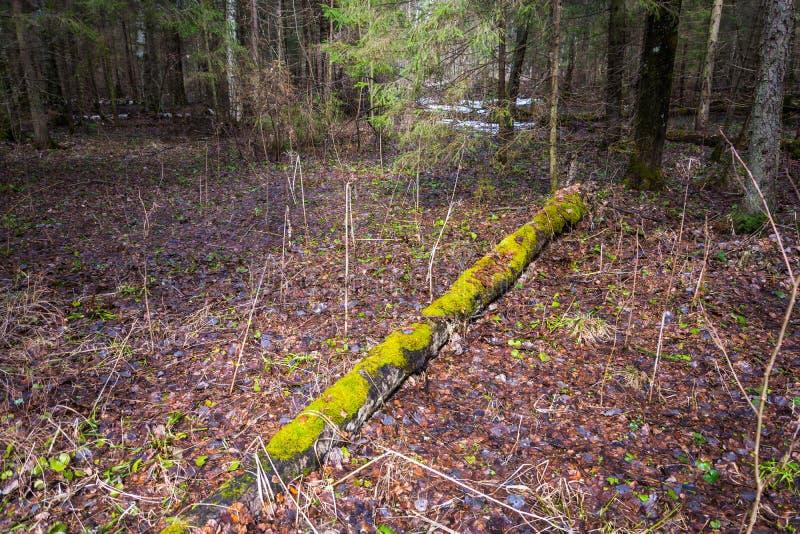 Παλαιός κορμός, που καλύπτεται με το πράσινο βρύο στοκ εικόνες