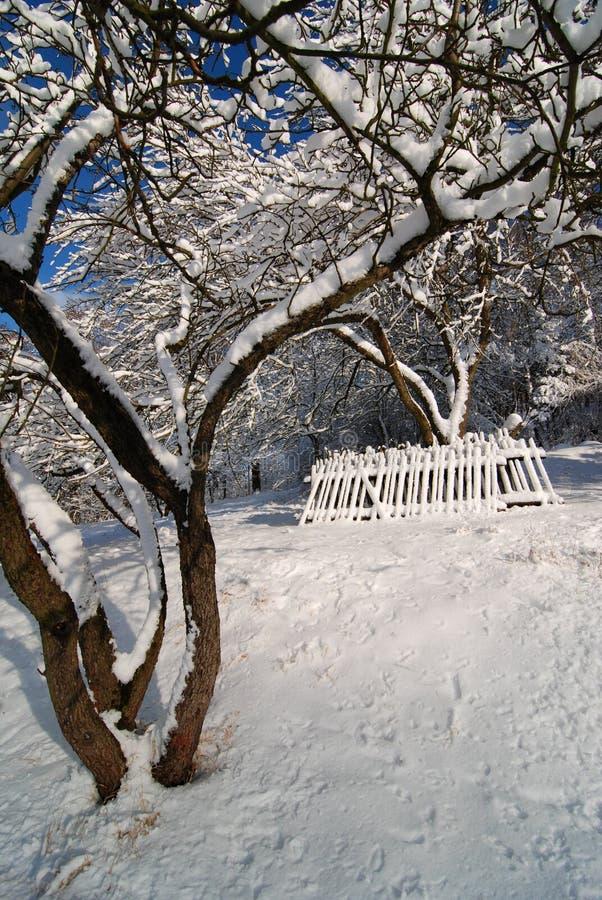 Παλαιός οπωρώνας το χειμώνα στοκ εικόνα με δικαίωμα ελεύθερης χρήσης