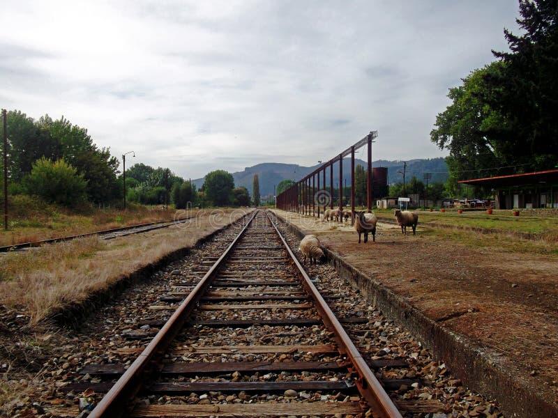 Παλαιός σταθμός τρένου με τα sheeps στο νότο της Χιλής στοκ φωτογραφία