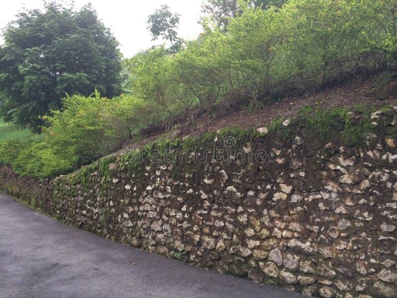 Παλαιός mossy τοίχος βράχου στη Κόστα Ρίκα στοκ φωτογραφίες με δικαίωμα ελεύθερης χρήσης