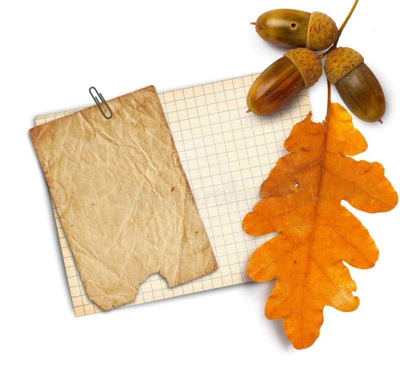 Παλαιό έγγραφο grunge με τα δρύινα φύλλα και τα βελανίδια φθινοπώρου στο λευκό στοκ φωτογραφίες
