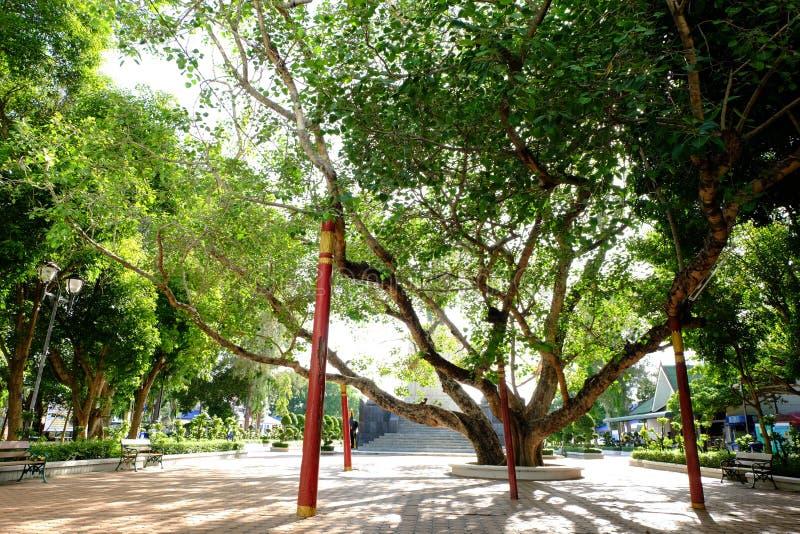 Παλαιό δέντρο Bohhi σε Suphanburi στοκ εικόνα