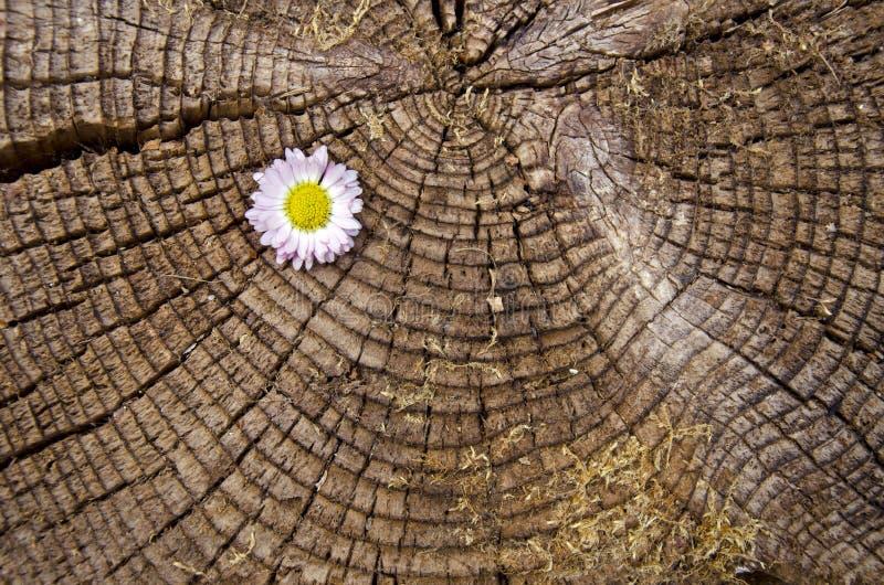 Παλαιό ηλικίας ξύλινο υπόβαθρο με το λουλούδι στοκ εικόνες