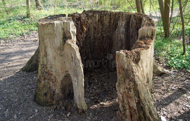 Παλαιό κοιλαίνω-έξω κολόβωμα δέντρων στοκ φωτογραφία