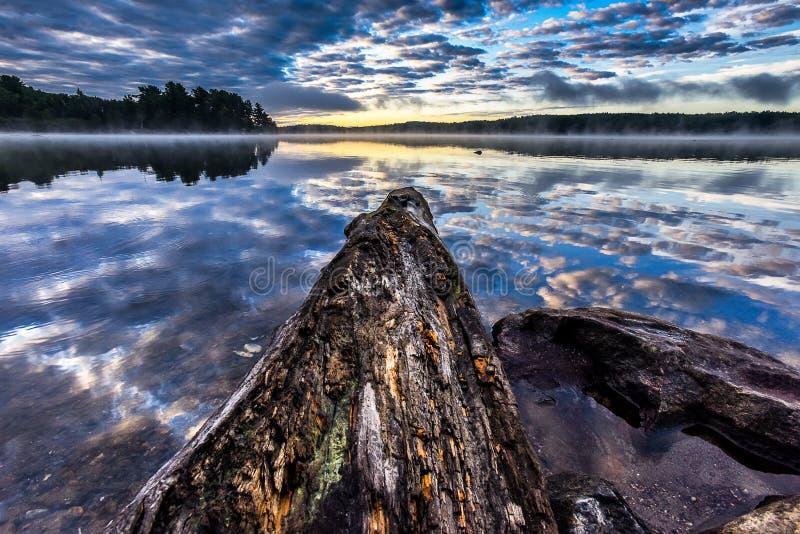 Παλαιό κούτσουρων έξω στη λίμνη kioshkoki algonquin στο κρατικό πάρκο, Καναδάς στοκ εικόνα