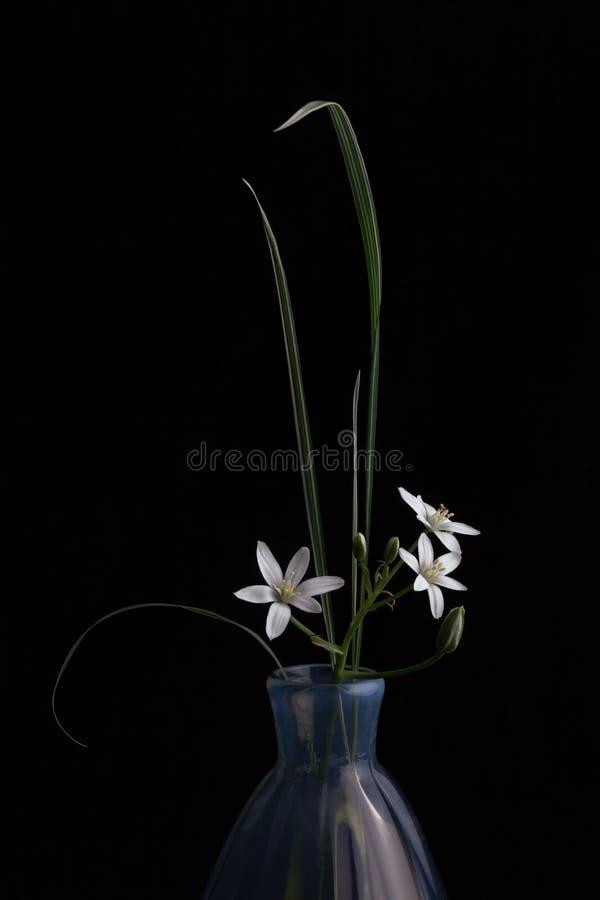 Παλαιό μπλε βάζο με έναν κλάδο των μικρών άσπρων λουλουδιών στοκ εικόνες