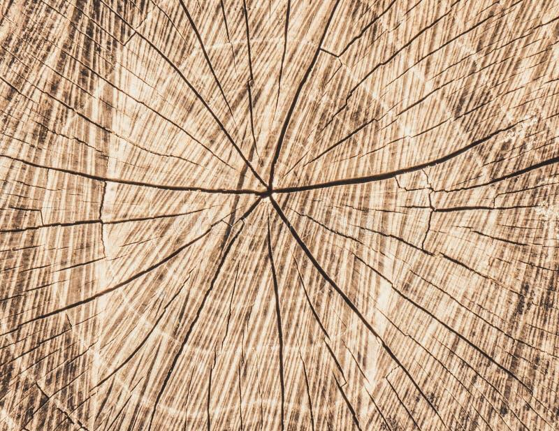 Παλαιό ξηρό κολόβωμα στοκ φωτογραφίες με δικαίωμα ελεύθερης χρήσης