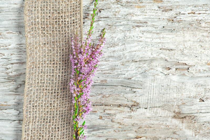 Παλαιό ξύλινο υπόβαθρο με την ερείκη και την κορδέλλα απόλυσης στοκ εικόνα με δικαίωμα ελεύθερης χρήσης