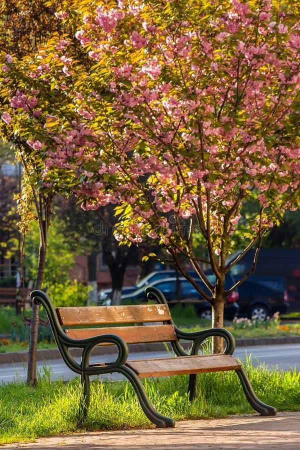 Παλαιό πάρκο πόλεων με το φανάρι στοκ εικόνα με δικαίωμα ελεύθερης χρήσης