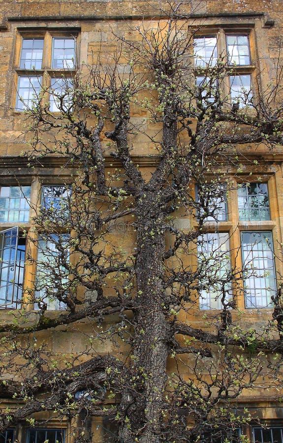 Παλαιό πέτρινο εξωτερικό Cotswold με το δέντρο στοκ εικόνα με δικαίωμα ελεύθερης χρήσης