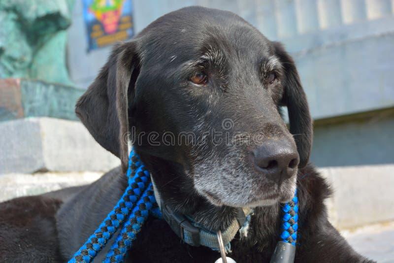 Παλαιό σκυλί που απολαμβάνει την ημέρα του στοκ φωτογραφία με δικαίωμα ελεύθερης χρήσης