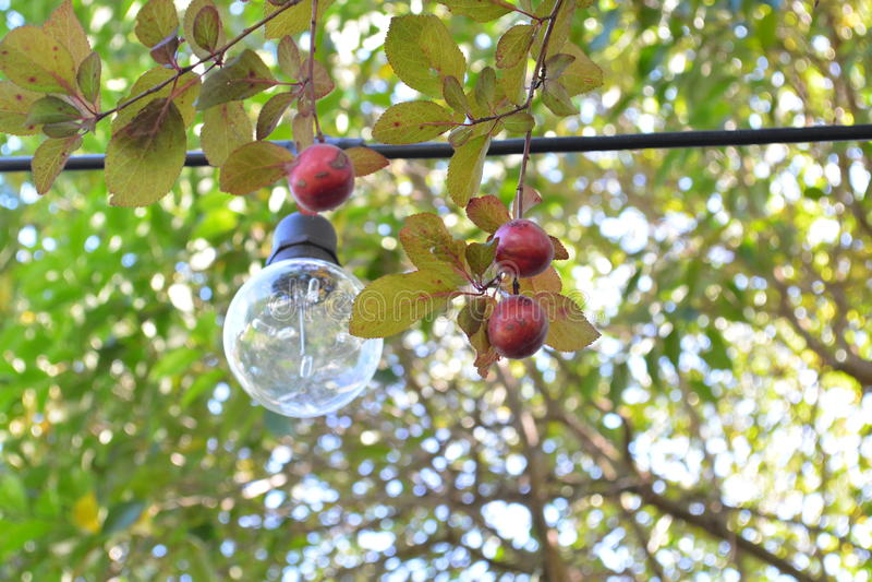 Παλαιό φως σε ένα δέντρο κερασιών στοκ εικόνες