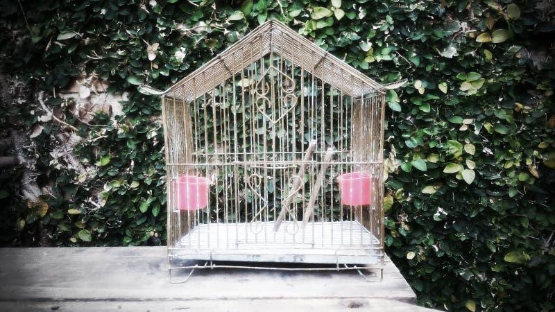 Παλαιό χρώμα birdcage στοκ φωτογραφία με δικαίωμα ελεύθερης χρήσης
