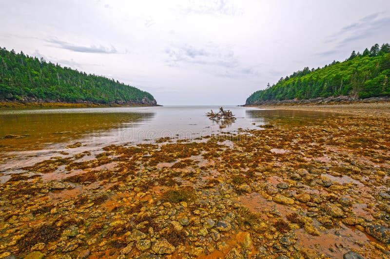 Παλιρροιακοί βράχοι at Low Tide στην ομίχλη και τη βροχή στοκ φωτογραφίες