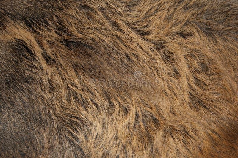 Παλτό στοκ φωτογραφία με δικαίωμα ελεύθερης χρήσης