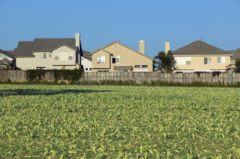 Πεδία αγρότη με τις συγκομιδές στοκ φωτογραφία με δικαίωμα ελεύθερης χρήσης