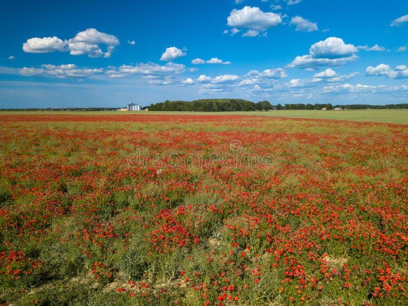 Πεδία παπαρουνών επάνω από την όψη Πολλά κόκκινα λουλούδια ν στοκ φωτογραφίες με δικαίωμα ελεύθερης χρήσης