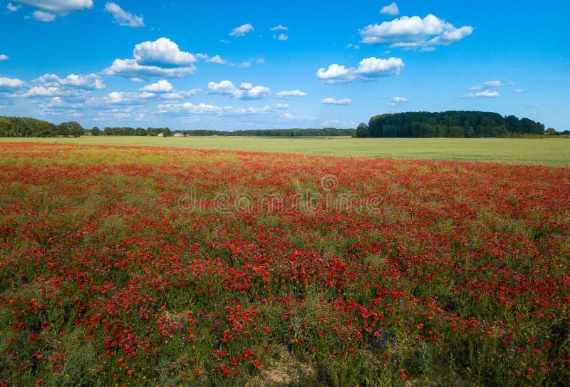 Πεδία παπαρουνών επάνω από την όψη Πολλά κόκκινα λουλούδια ν στοκ εικόνα