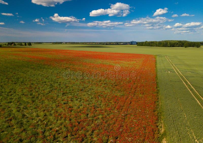 Πεδία παπαρουνών επάνω από την όψη Πολλά κόκκινα λουλούδια ν στοκ εικόνες με δικαίωμα ελεύθερης χρήσης